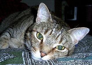 http://catvaccines.misterlinks.net/images/jackoct2002.jpg