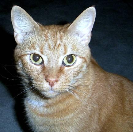 http://catvaccines.misterlinks.net/images/sonny2003-6-14.jpg