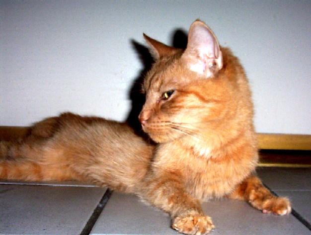 http://catvaccines.misterlinks.net/images/sonny2006-6.jpg